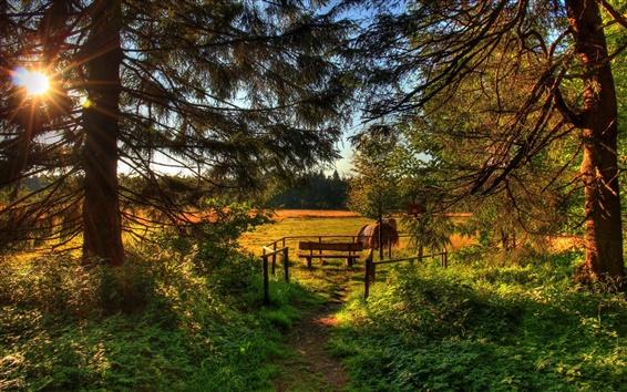 Wallpaper Forest, trees, pine needles, grass, fields, bench, sun