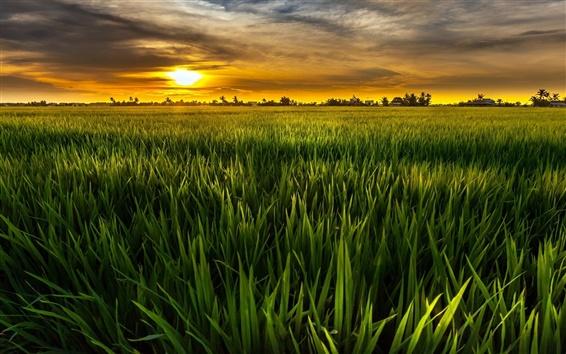 Wallpaper Green, sun, fields, green, sky, clouds, dusk