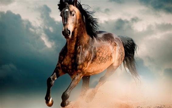 Fonds D écran Cheval Mustang Désert Galop 1920x1440 Hd Image