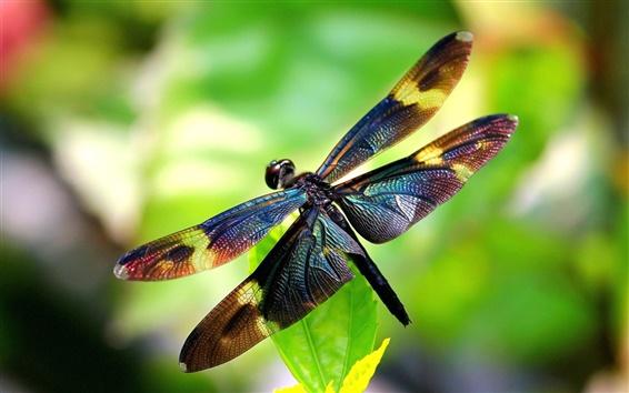 Fondos de pantalla Insectos, libélula, alas