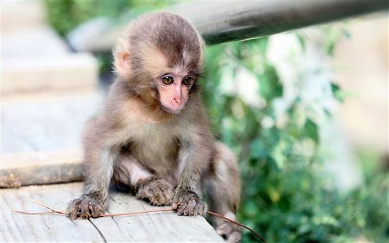 Обои Маленькая обезьяна, природа, боке