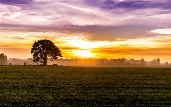 Wallpaper Morning, dawn, fog, sunrise, sky, clouds, fields, meadow, trees