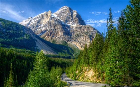 Обои Горы, дорога, лес, Канада, Национальный парк Йохо