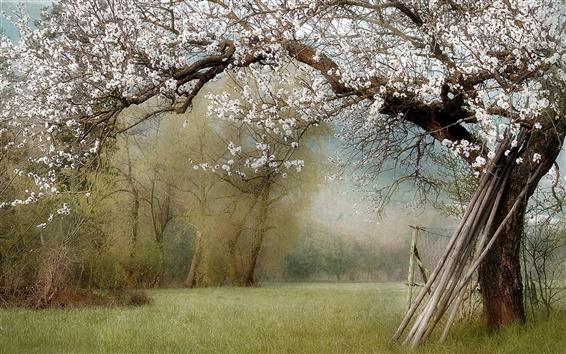 Обои Природа, сад, весна, деревья, белые цветы