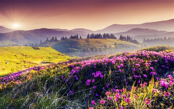 Wallpaper Nature spring, hills, flowers, trees, sun
