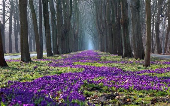 Fond d'écran Parc paysage de printemps, arbres, fleurs, crocus, chemin