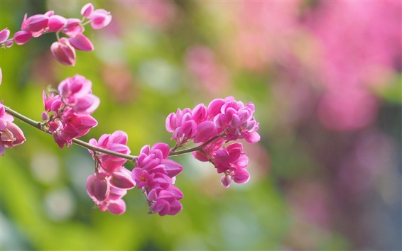 Fond d'écran Fleurs roses, arrière-plan flou, printemps