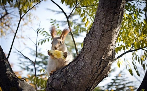 Fond d'écran Écureuil mangeant la pomme