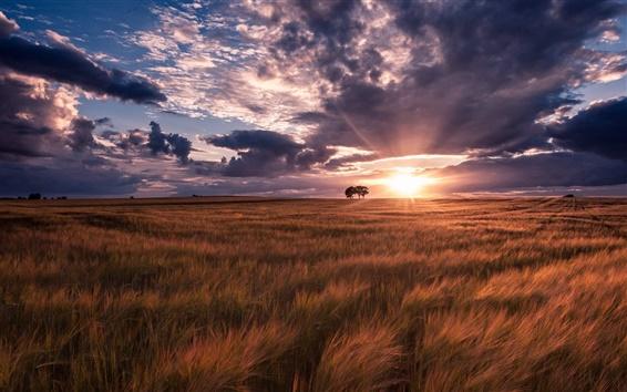 Fondos de pantalla Verano, campos, puesta del sol, naturaleza, paisaje,