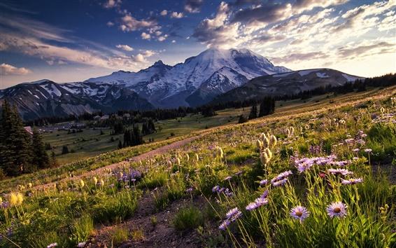 Обои США, Вашингтон, Национальный парк, горы, деревья, луг, цветы, солнечный свет
