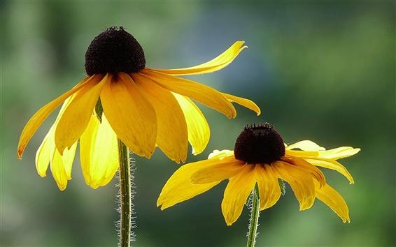 Wallpaper Yellow flowers, macro, bokeh