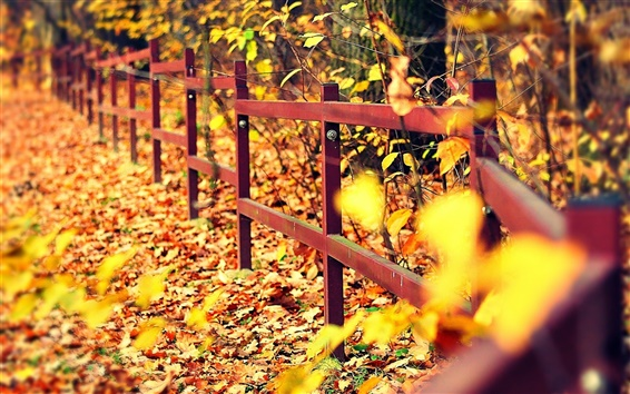 Wallpaper Autumn, fence, trees, yellow leaves