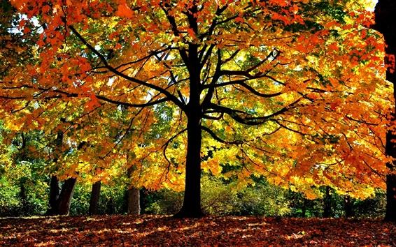 Fond d'écran Arbres de la forêt d'automne, les feuilles jaunes, branches, la lumière du soleil