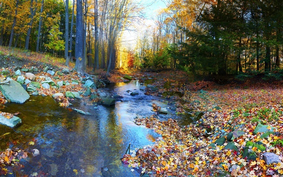 Обои Осенний пейзаж, лес, деревья, красочные, листва, реки, камни