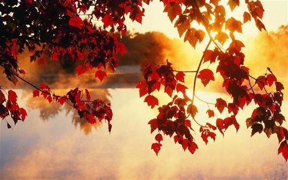Otoño, árboles, hojas, rayos de luz solar, hermosos paisajes Fondos ...