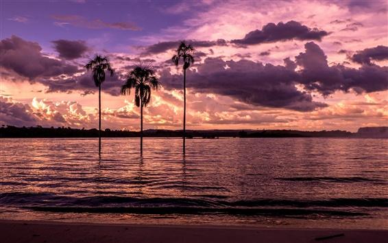 壁紙 ビーチ、ベイ、ヤシの木、夕日、紫