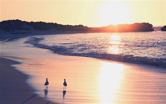 Papéis de Parede Praia, mar, areia, surf, gaivotas, nascer do sol