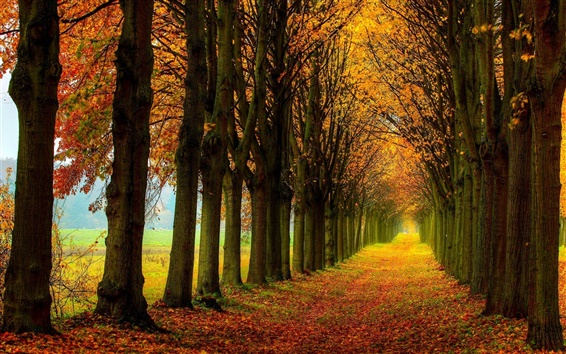 Wallpaper Beautiful nature scenery, forest, trees, autumn, path