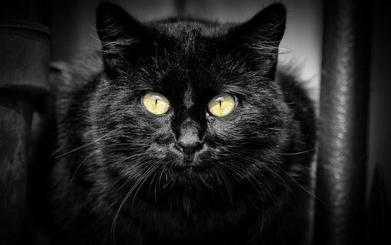Обои Черная кошка, желтые глаза, черный фон