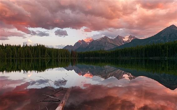 Fond d'écran Canada, le parc national Banff, Rocheuses, Herbert lac, forêt de conifères