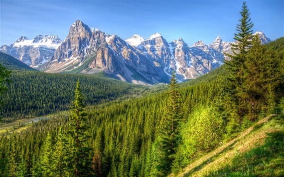 Обои Канада, горы, деревья, лес, голубое небо, Банф парк