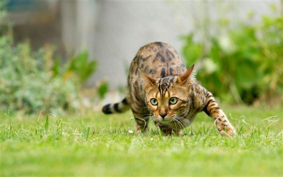 Fondos de pantalla Cat colarse en la hierba