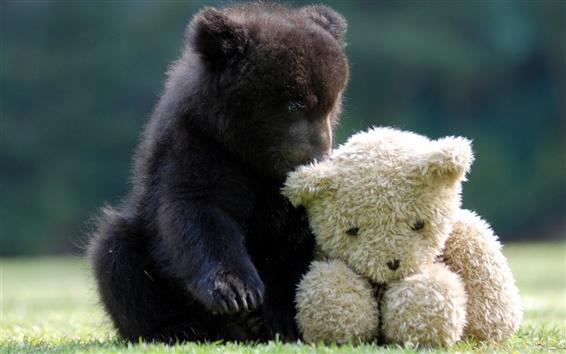 Обои Симпатичный медведь с плюшевым мишкой