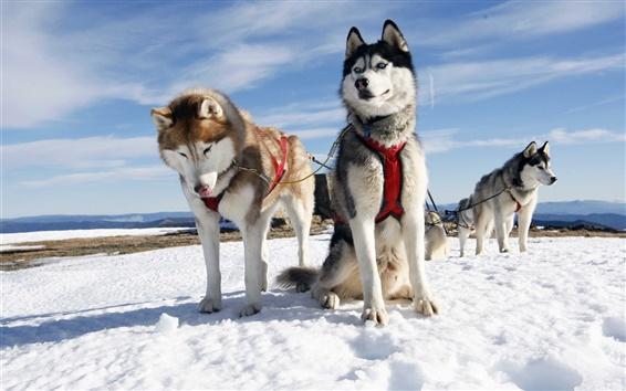 Papéis de Parede Trenós puxados por cães, neve, céu, frio