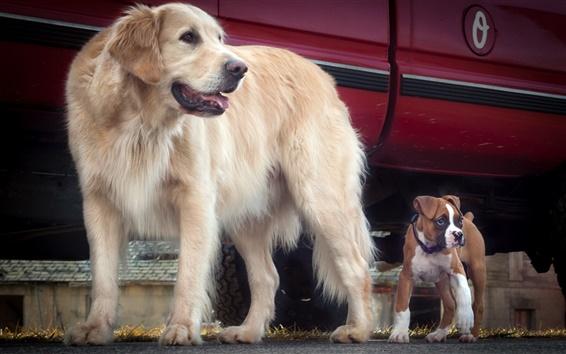 Papéis de Parede Cães, amizade