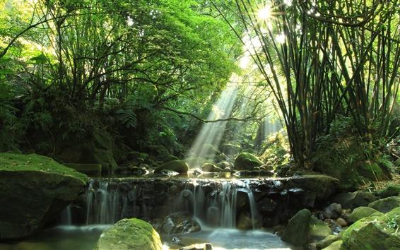 Fondos de pantalla Bosque, río, cascada, rocas, musgo, rayos del sol