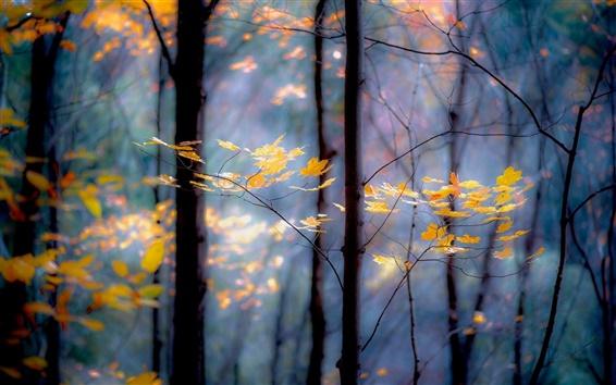 Обои Лес, деревья, ветки, желтые листья, осень
