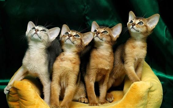Papéis de Parede Quatro gatinho bonito