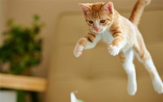 Papéis de Parede salto gatinho