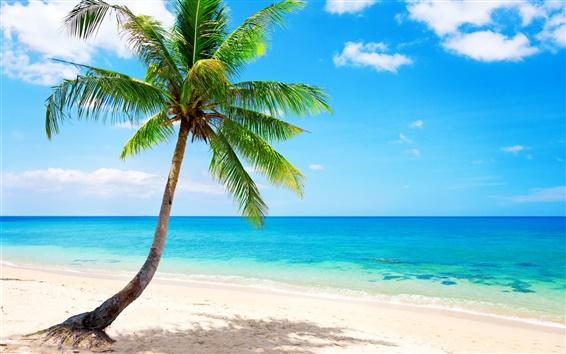 Papéis de Parede Palmeira solitária, tropical, praia, costa, mar