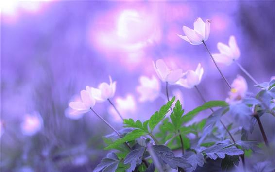 Обои Утренние цветы, листья, боке