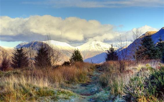 Fond d'écran Les sommets des montagnes, la neige, les arbres, l'épinette, l'herbe, le gel