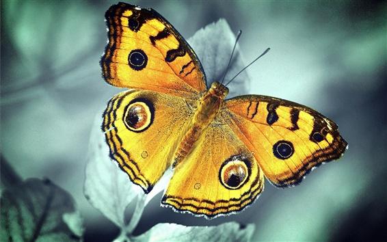 Обои Оранжевая бабочка, листья, боке