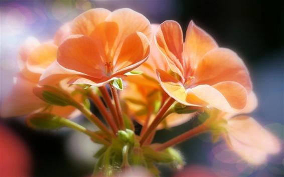 Обои Оранжевые цветы, боке, макро