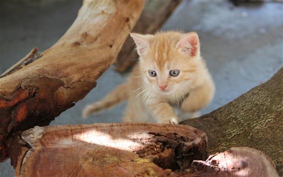 Wallpaper Tree stump, kitten