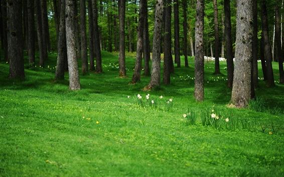 Papéis de Parede Árvores, flores, prado