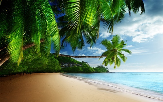 Wallpaper Tropical landscape, palm trees, sunshine, beach, coast, sea, sky, blue