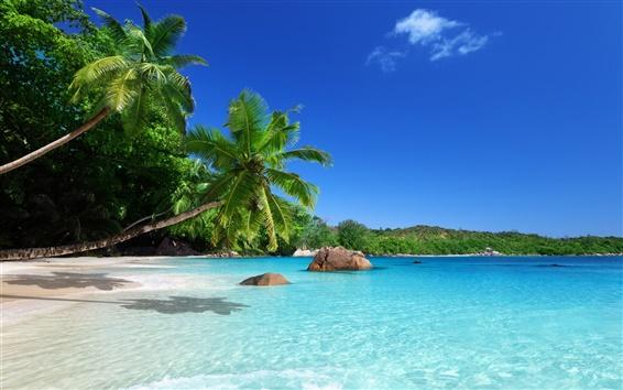 Wallpaper Tropical paradise, sunshine, beach, coast, sea, palm trees