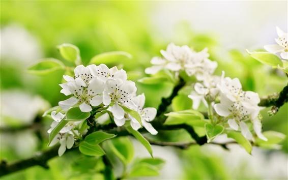 Обои Ветки, яблоко цветы, зелень