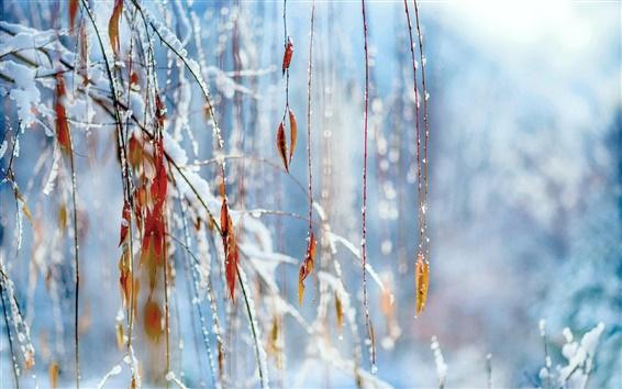 Fond d'écran Hiver, neige, branches, feuillage