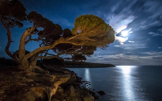 Fond d'écran Bay, sur la côte, arbre, nuit, étoiles, lune