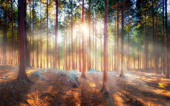 Fond d'écran Belle nature, la forêt, les arbres, les rayons du soleil, ombre