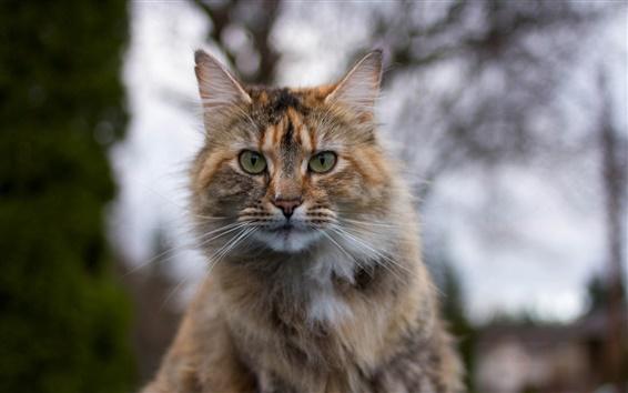 Papéis de Parede Cat retrato, cara, borrão