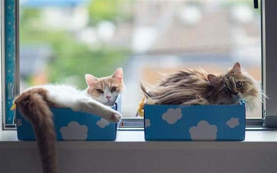 Wallpaper Cat sleep in boxes