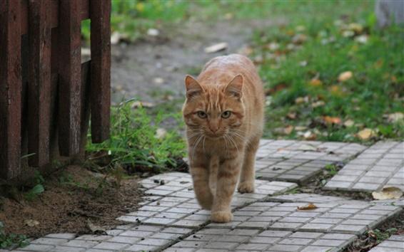 Обои Кошка ходят по деревне