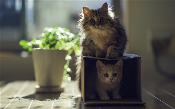 Wallpaper Cat with kitten, house, box